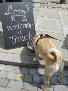 Treacle Market hound