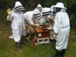 Stratford upon Avon Beekeepers Association meeting