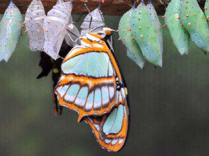 Butterfly out of comfort zone