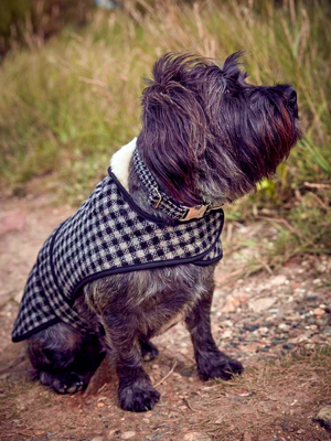 Izzy Lane dog coat